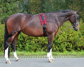 Lunging training system Black