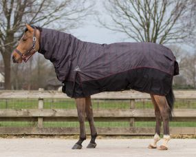 Turnout rug Collection with neck 300gr Wildlife 215