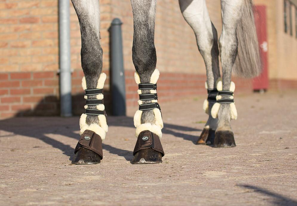 Ontario tendon and fetlock boots