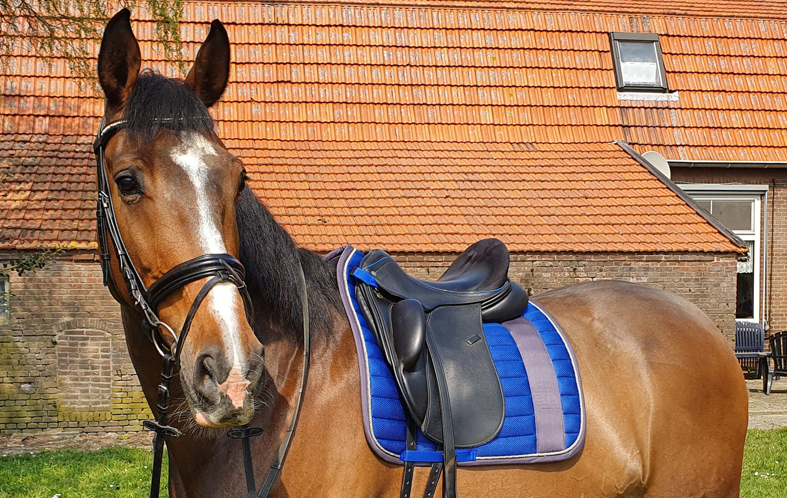 Review saddle pad airmesh